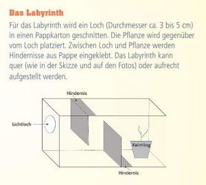 Experiment Labyrinth für Bohnen- oder Kartoffelkeimlinge (ab ca. 4 Jahre) Image